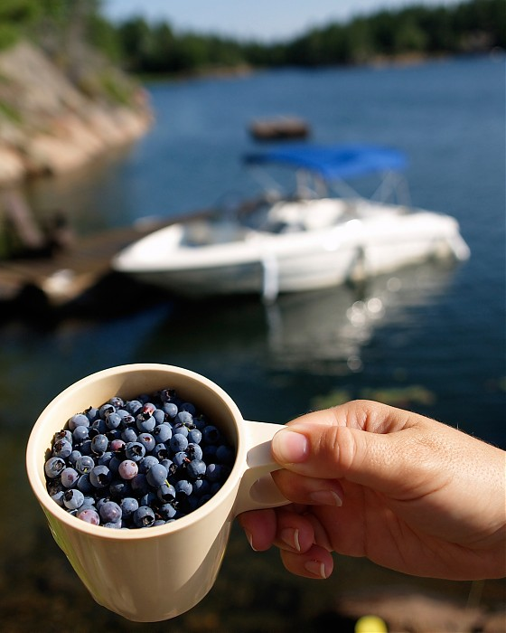 photoblog image Picking Blueberrys at the Cottage