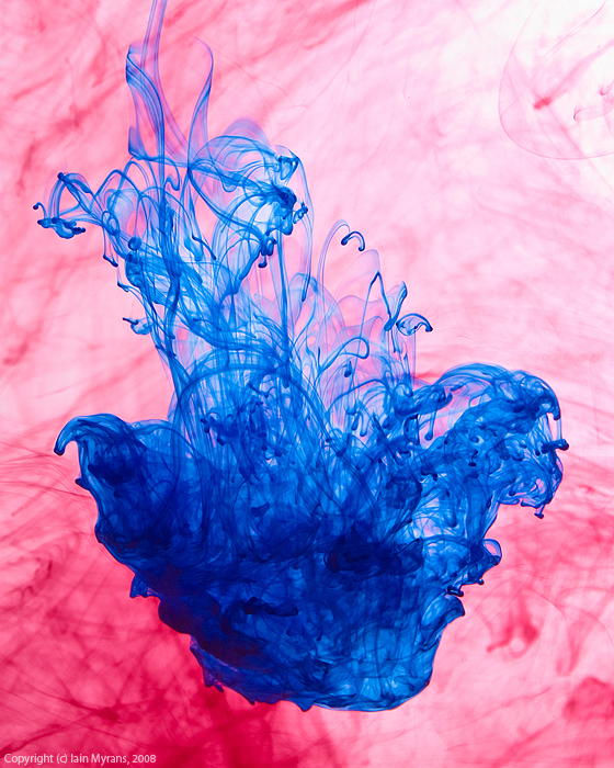 photoblog image Ink or Jellyfish?