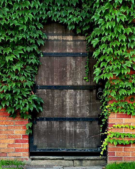 photoblog image Door in the Vines