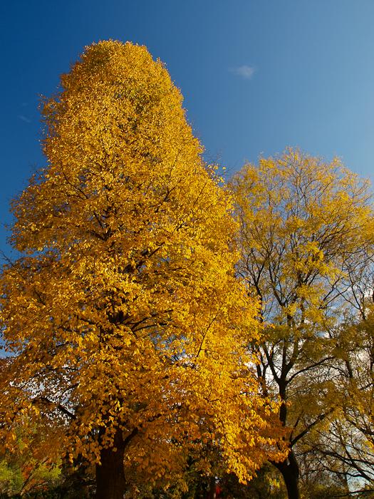 photoblog image Fall in Toronto