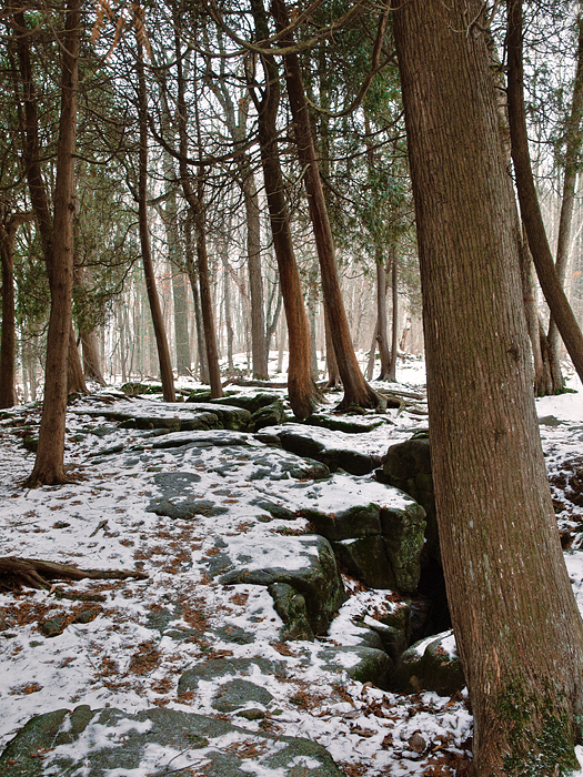 photoblog image Winter on the Bruce Trail, Halton Hills, Ontario