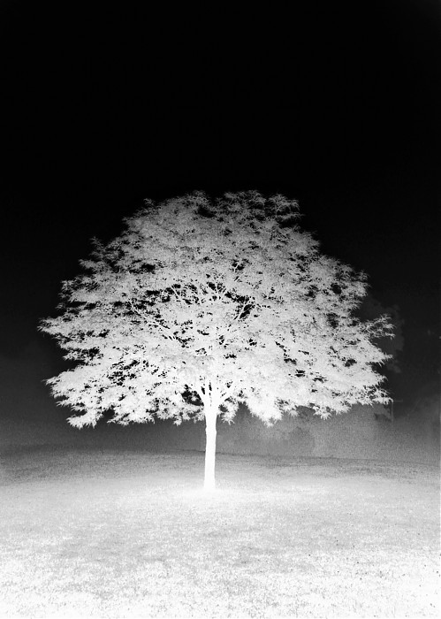 photoblog image Foggy Day Tree